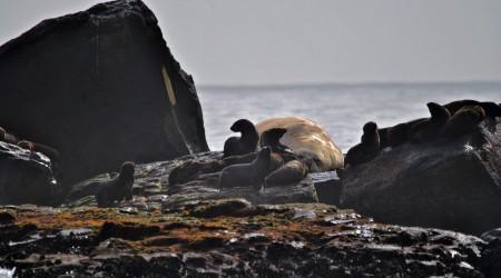 Refúgio de Vida Silvestre da Ilha dos Lobos
