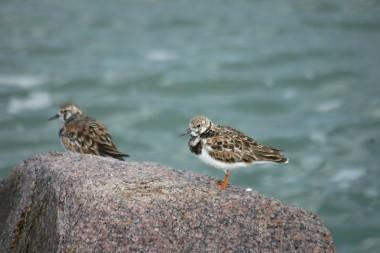O Refúgio de Vida Silvestre do Molhe Leste: muito além dos pinípedes