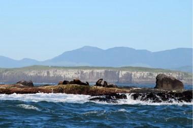 Projeto Pinípedes do Sul realiza monitoramentos simultâneos no Molhe Leste e na Ilha dos Lobos