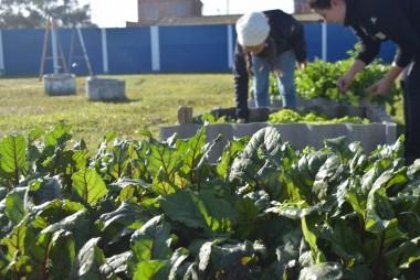 Projeto Pinípedes do Sul realiza atividades de colheita na Escola Ramiz Galvão