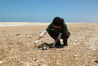 Dinâmica animal: a chegada do verão e a mudança nas ocorrências de pinípedes e tartarugas