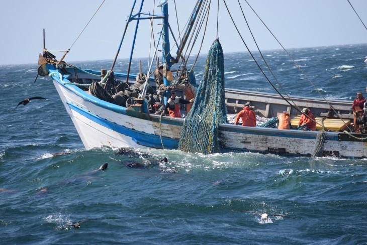 Projeto Pinípedes do Sul realiza sétimo embarque em frota de arrasto