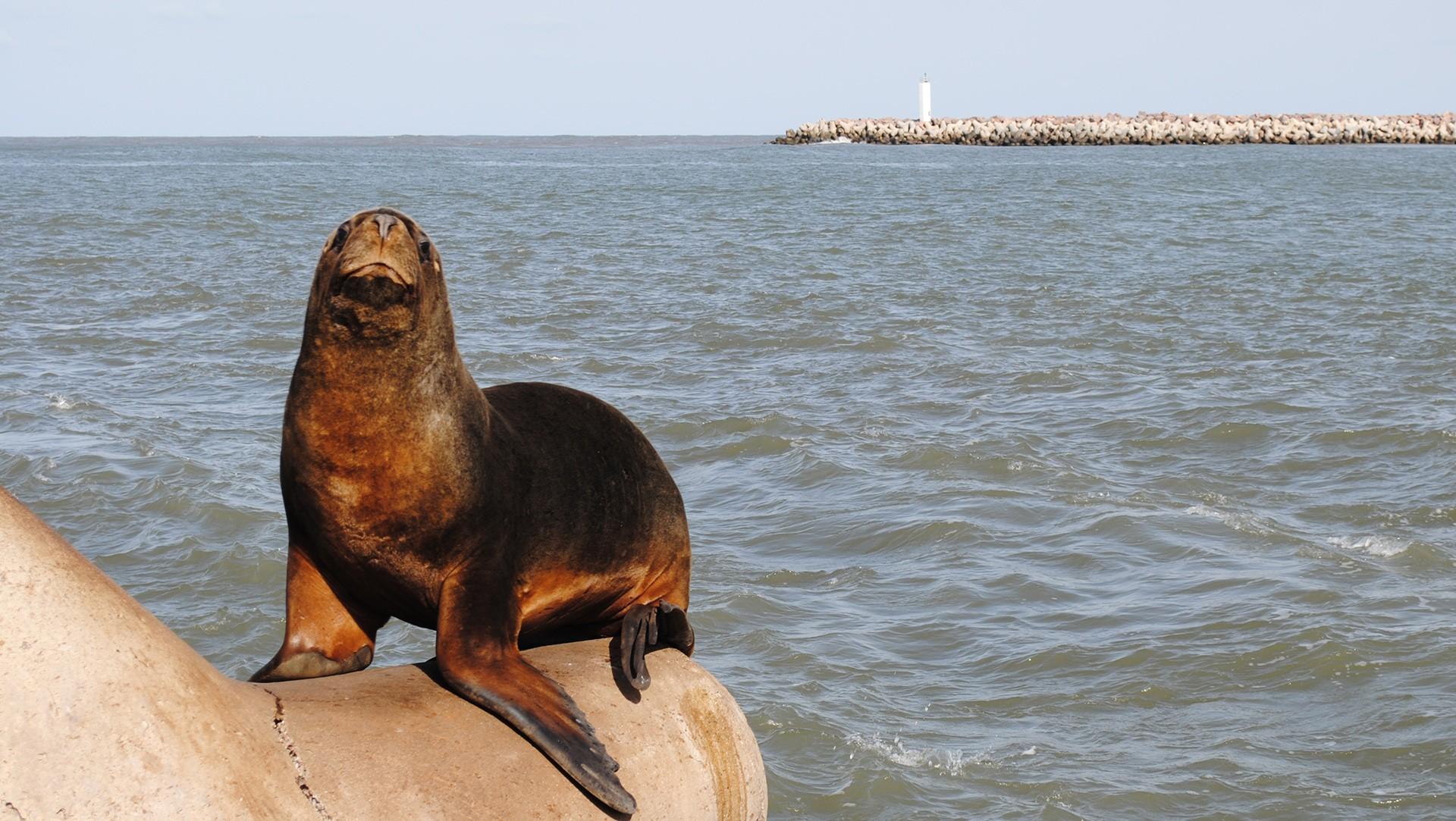 Nossa vida, nossos mares: Os Pinípedes do Sul