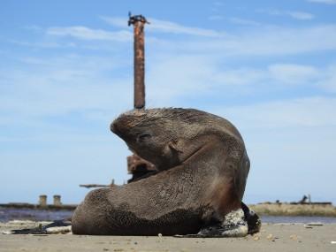 Quatorze projetos de biodiversidade marinha apresentam espécies ameaçadas no Brasil